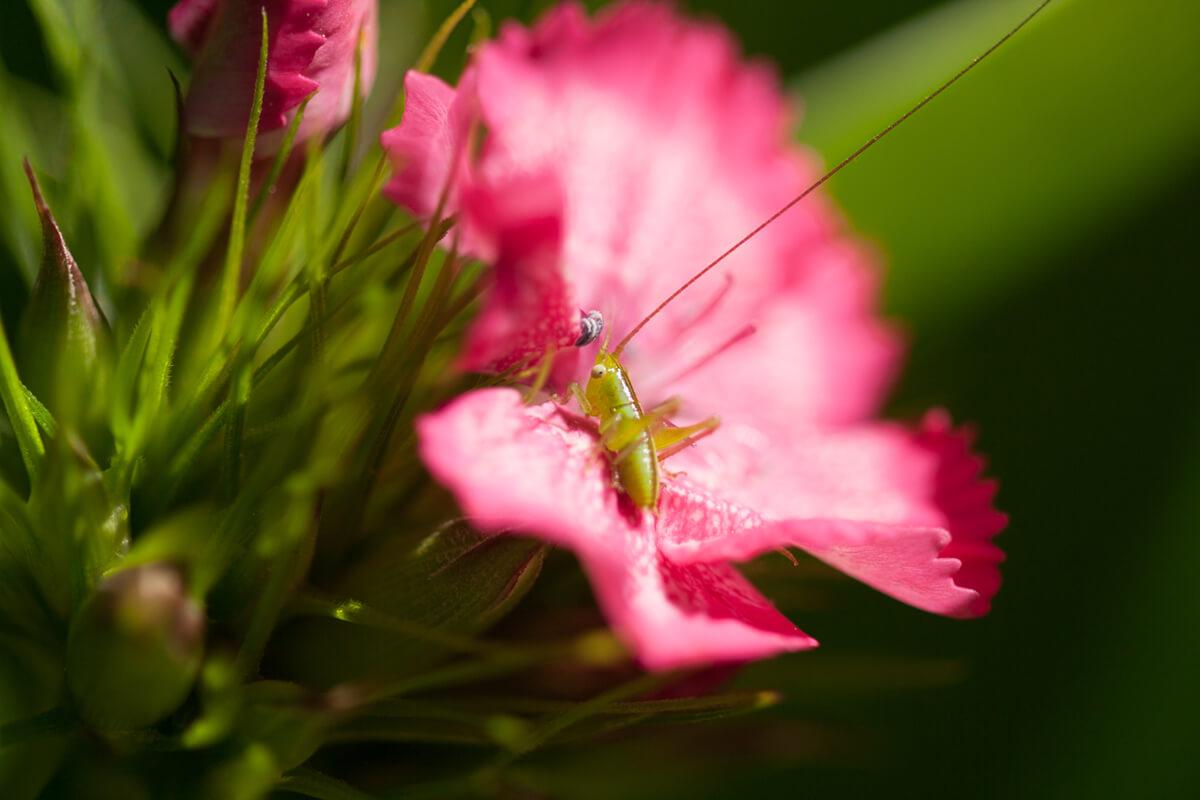 Azelia and Grasshopper